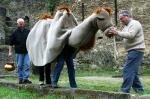 Kamelrennen - Spiele – Angebote